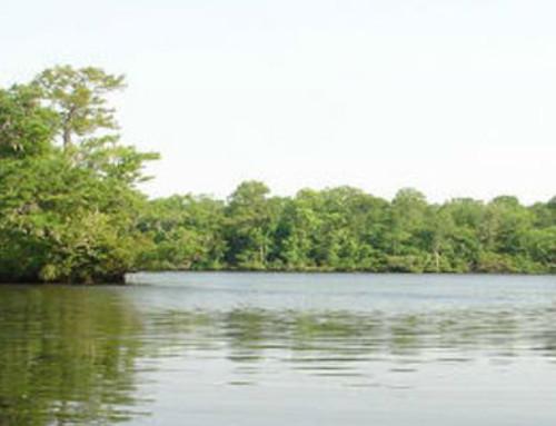 Northeast Cape Fear River Initiative