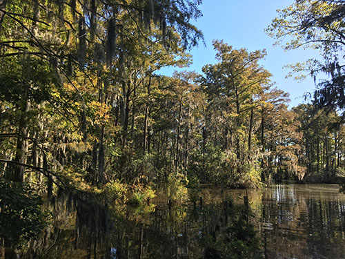 Salmon Creek State Natural Area - NC Coastal Land Trust